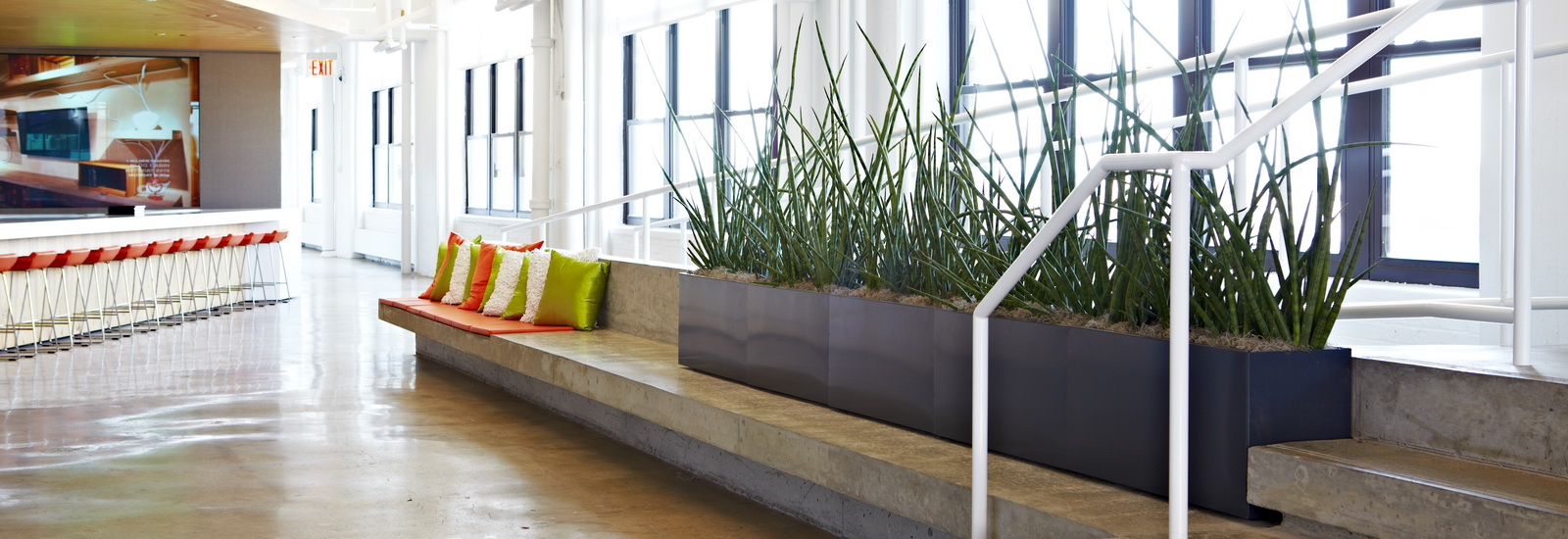 Indoor Plants-02