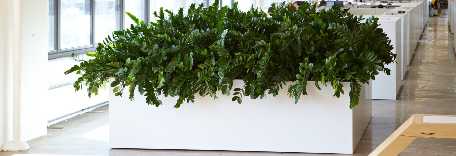Indoor Plants-03