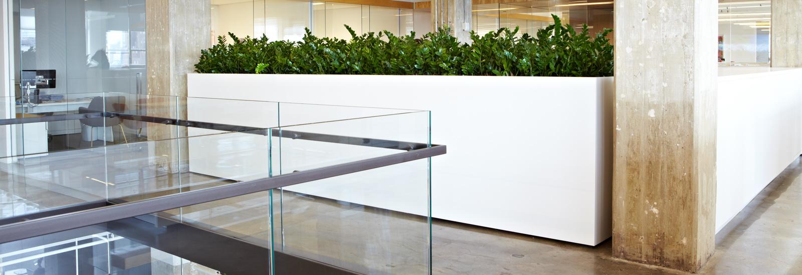 Indoor Plants-05