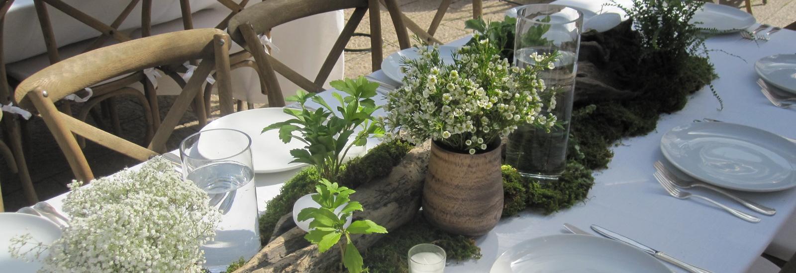 Indoor Plants-07