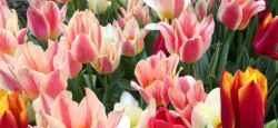 blog-spring-flowers