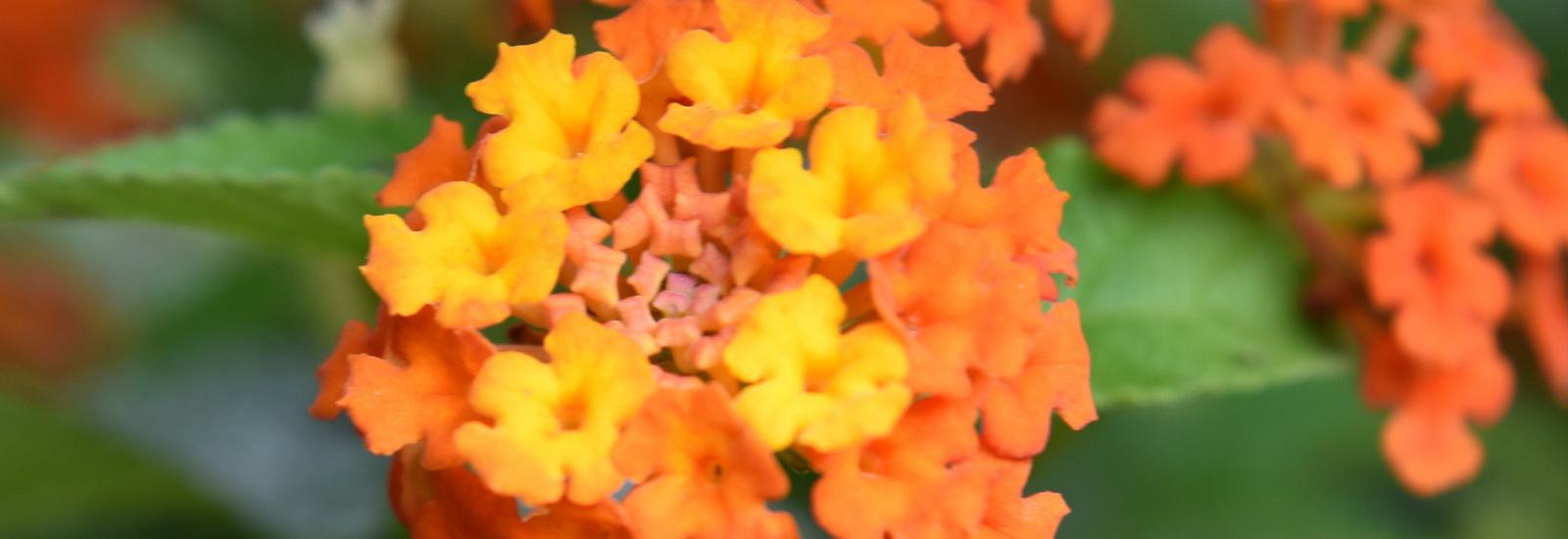 Garden Care-07