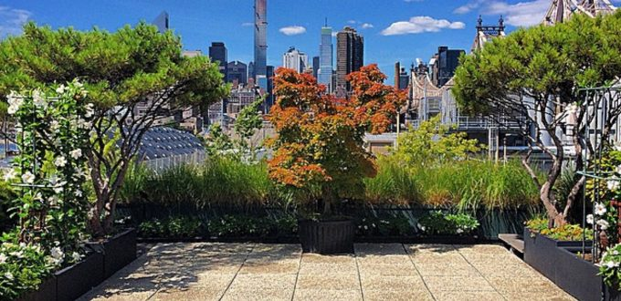 Plant Specialists view of the city