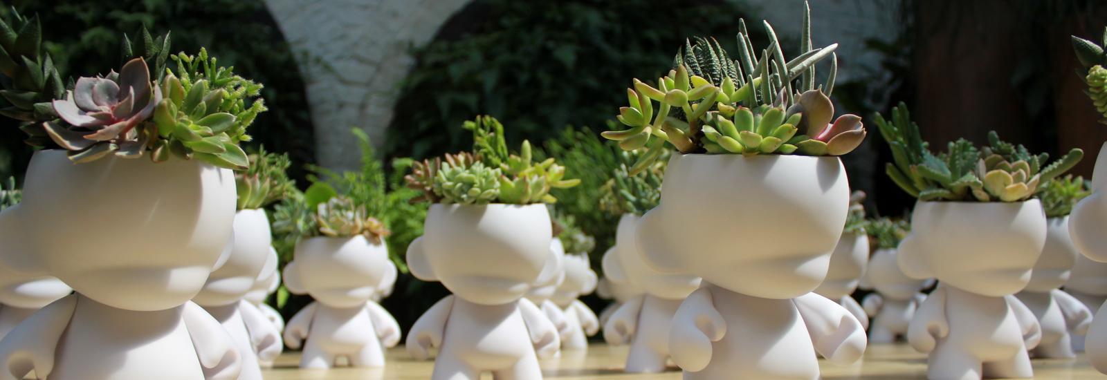 Indoor Plants-08